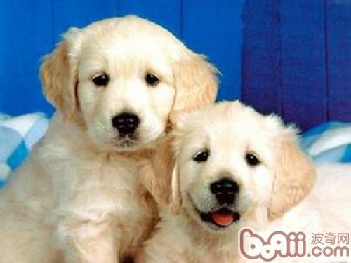 狗狗寄养前主人需要做的准备-成犬饲养